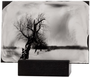 Tintype of a Tree